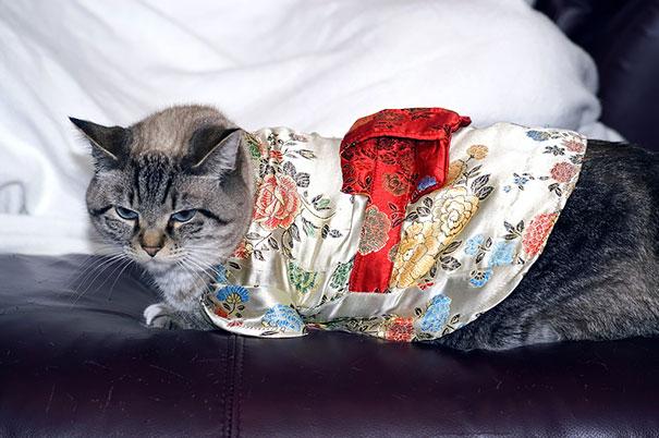 Cat In Kimono 16