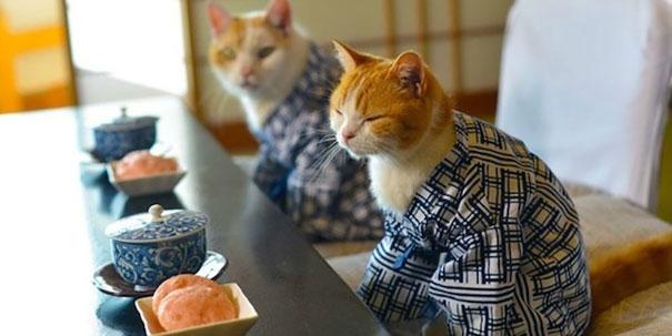 Cat In Kimono 17