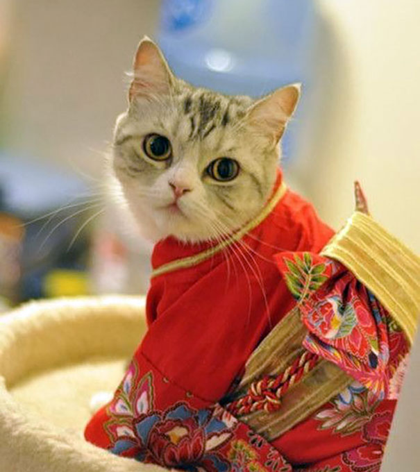Cat In Kimono 18