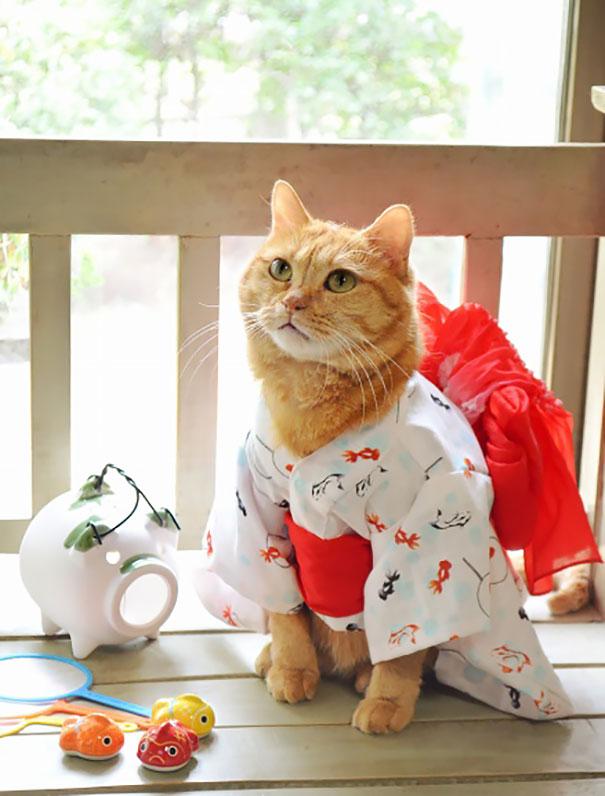 Cat In Kimono 19