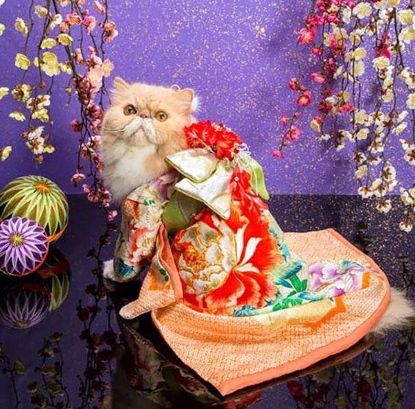 Cat In Kimono 20