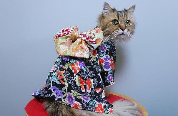 Cat In Kimono 21