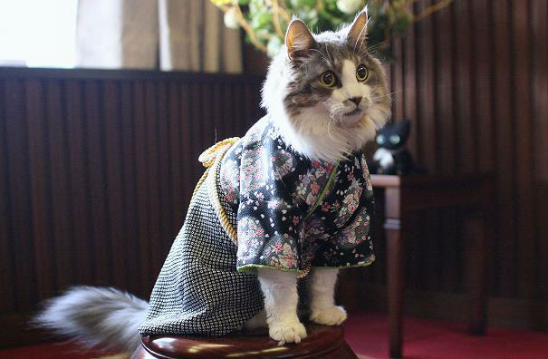 Cat In Kimono 3