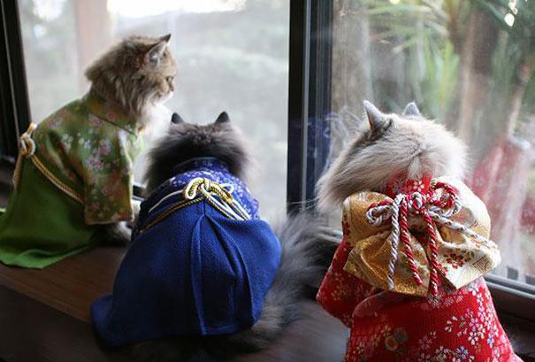 Cat In Kimono 4