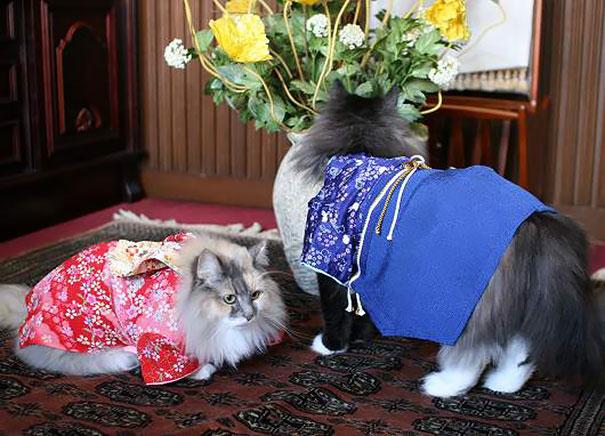 Cat In Kimono 5
