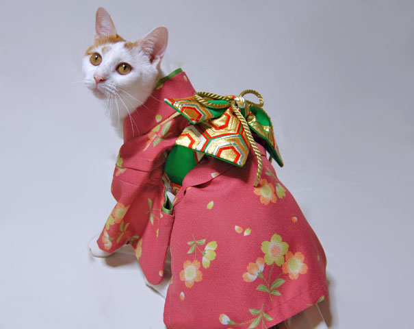 Cat In Kimono 6