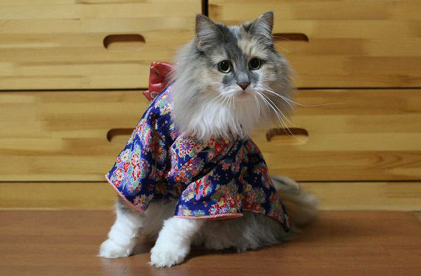 Cat In Kimono 7