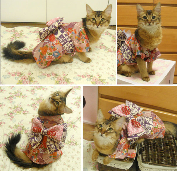 Cat In Kimono 8