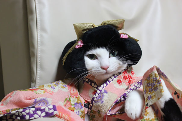 Cat In Kimono 9
