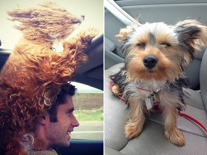 Dog Car Ride 11