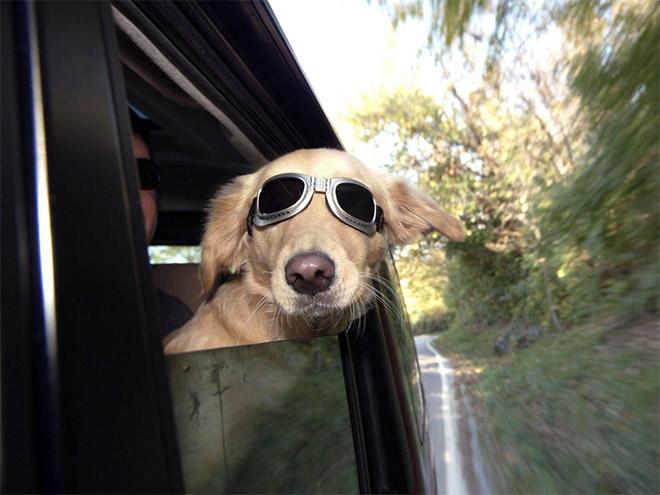 Dog Car Ride 13