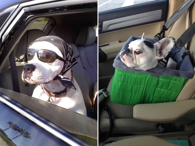 Dog Car Ride 18