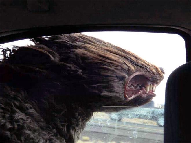 Dog Car Ride 19