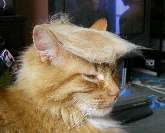Donald Trump Cat 1