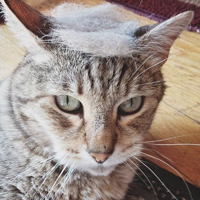 Donald Trump Cat 11