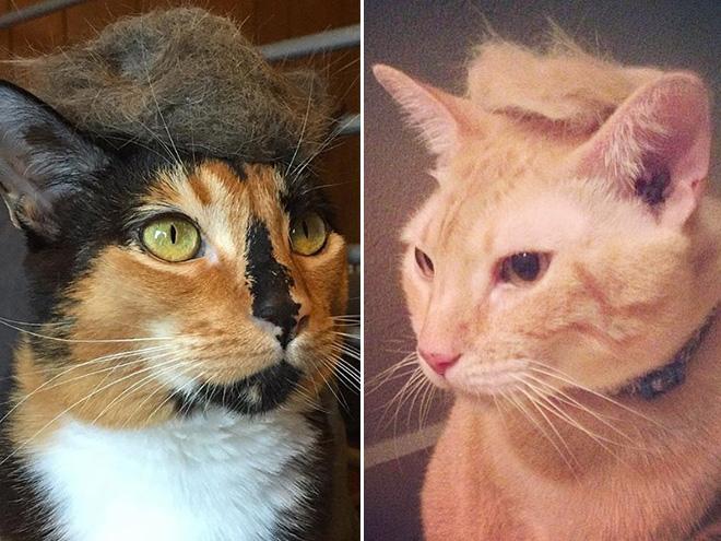 Donald Trump Cat 12