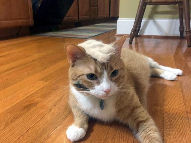 Donald Trump Cat 13