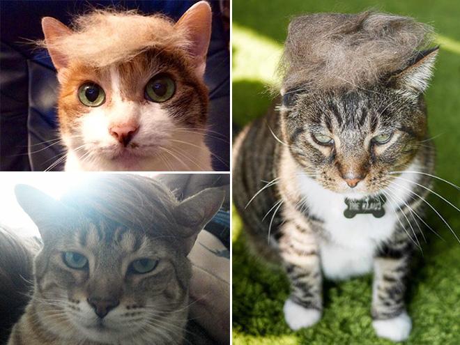 Donald Trump Cat 14