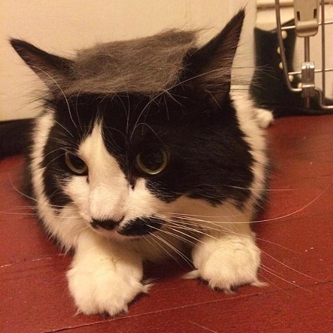 Donald Trump Cat 15