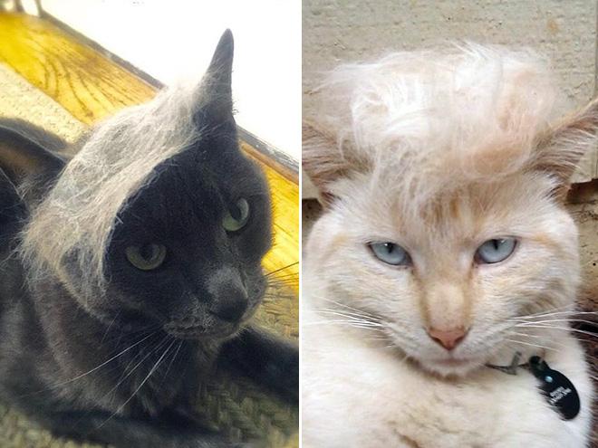 Donald Trump Cat 16