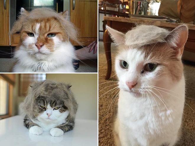Donald Trump Cat 3