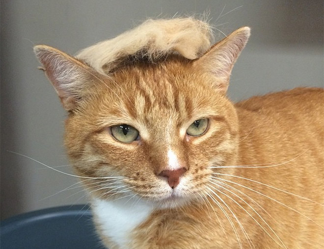 Donald Trump Cat 5