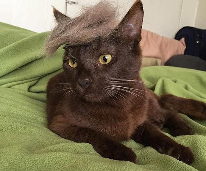 Donald Trump Cat 7