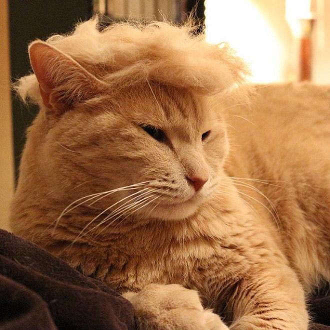 Donald Trump Cat 8
