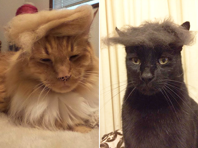 Donald Trump Cat 9