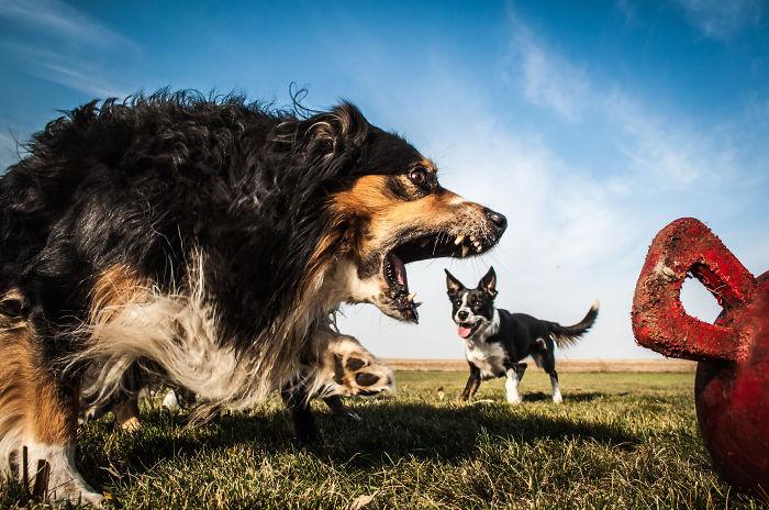Giant Dog 5