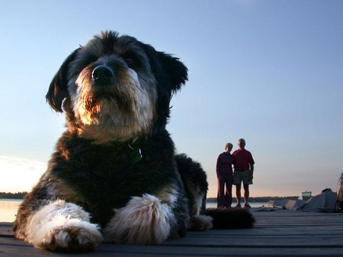 Giant Dog 6