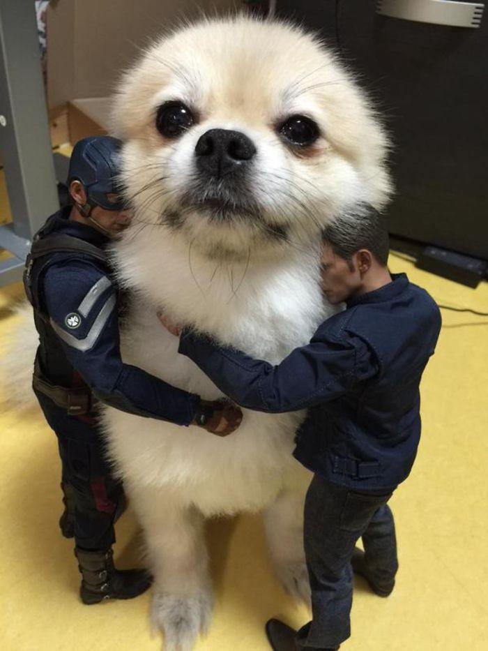 Giant Dog 7