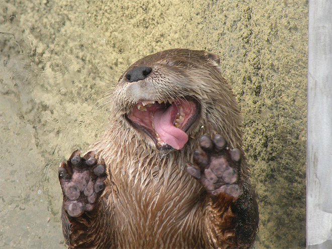 Animals Licking Windows 5