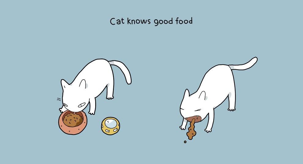 Benefits Of Having A Cat 1