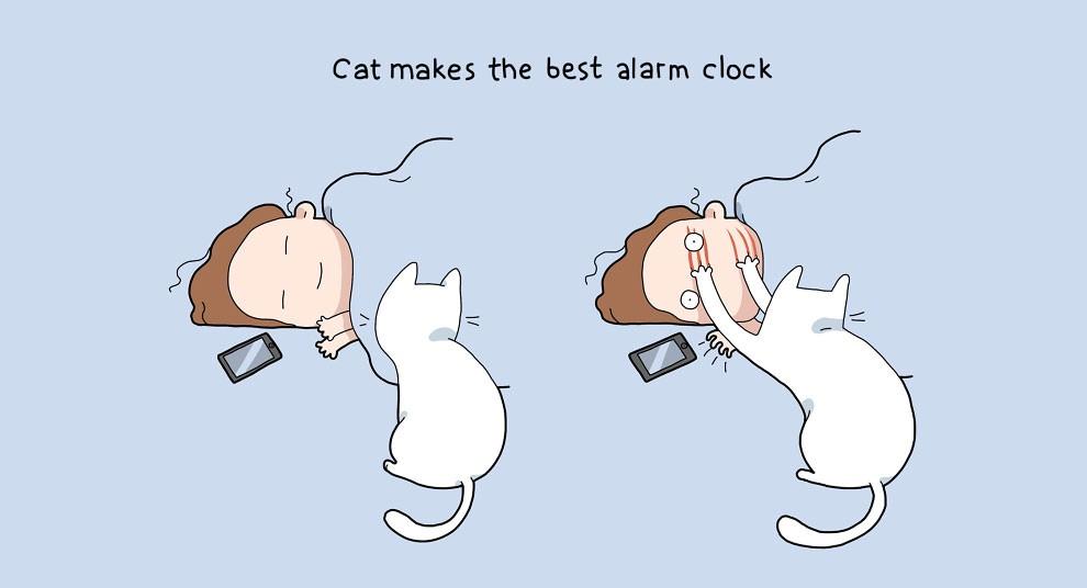 Benefits Of Having A Cat 4