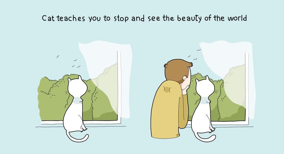 Benefits Of Having A Cat 8