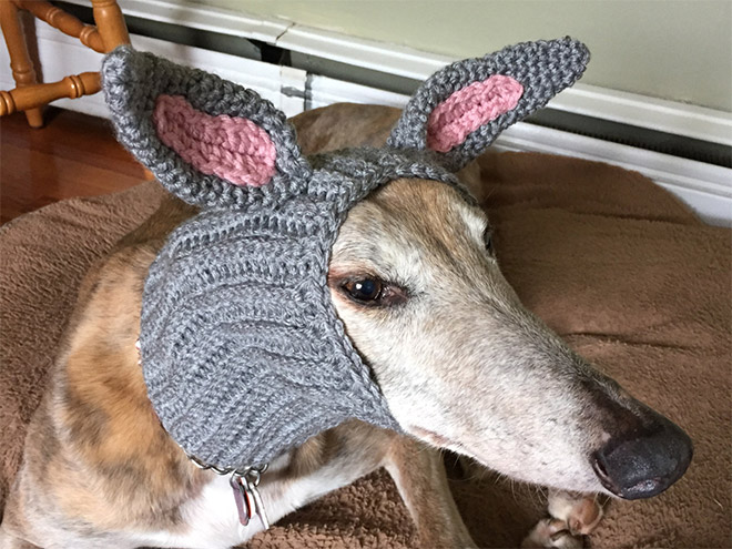 Crocheted Pet Hat 1