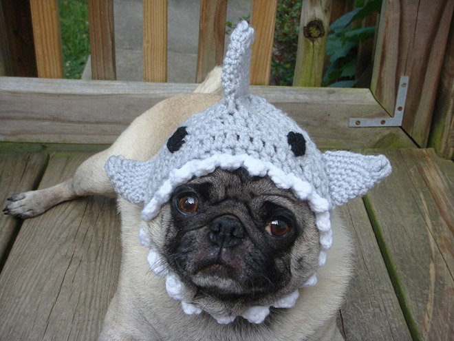 Crocheted Pet Hat 12