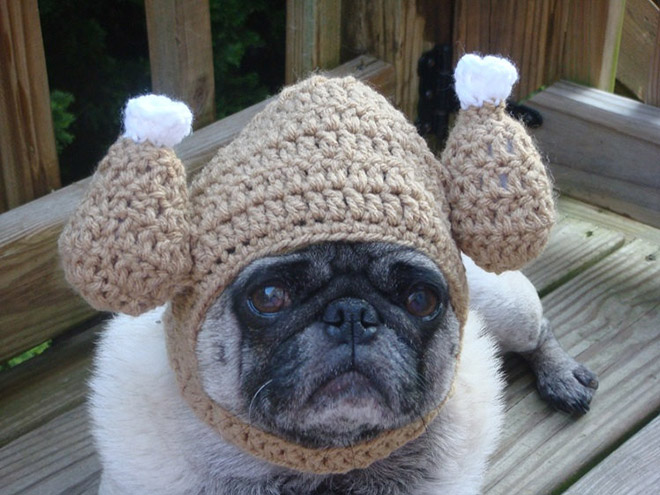 Crocheted Pet Hat 14
