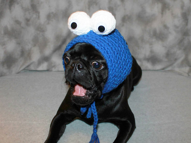Crocheted Pet Hat 3