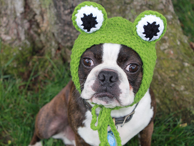 Crocheted Pet Hat 8