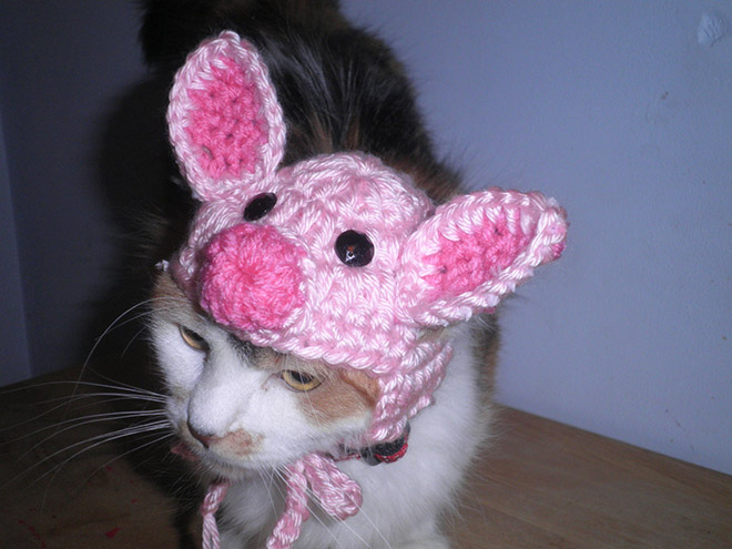 Crocheted Pet Hat 9
