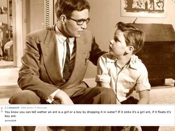 Dad Joke 8