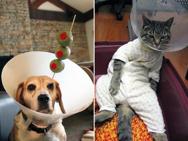 Pets Wearing Cones 11