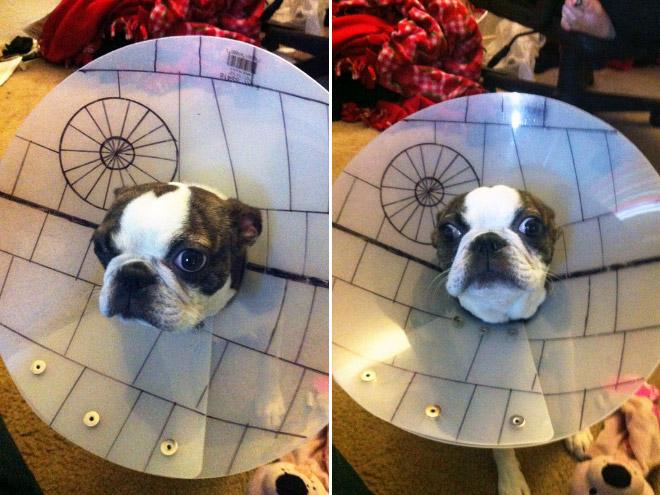 Pets Wearing Cones 3