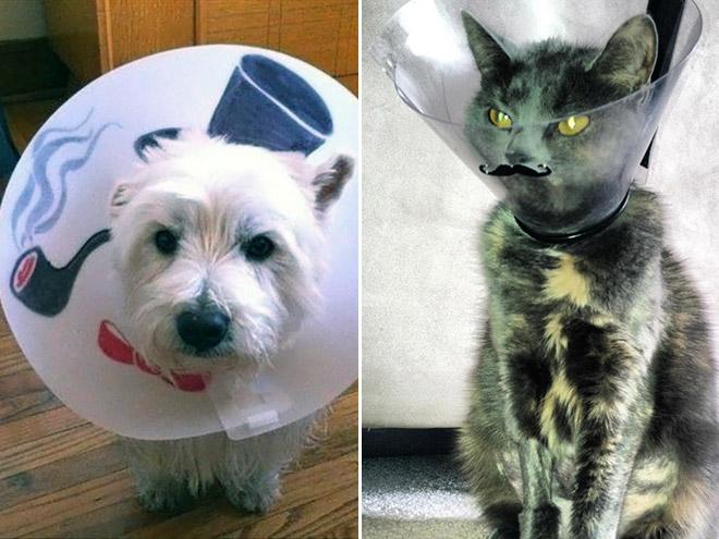 Pets Wearing Cones 5