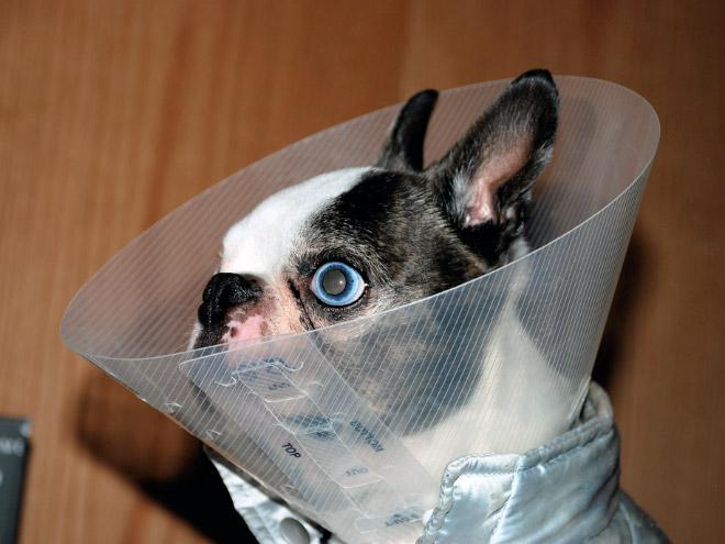 Pets Wearing Cones 6