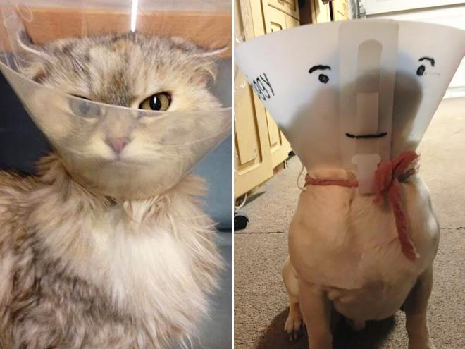 Pets Wearing Cones 9