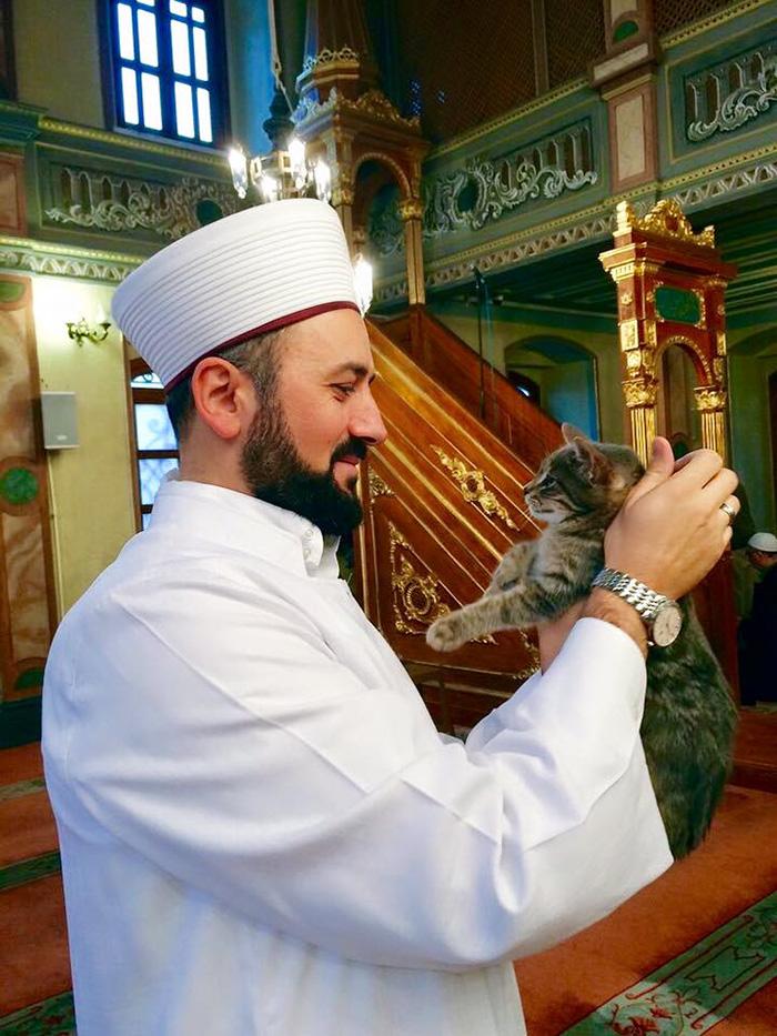 Mosque Cat 2