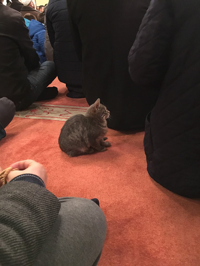 Mosque Cat 3
